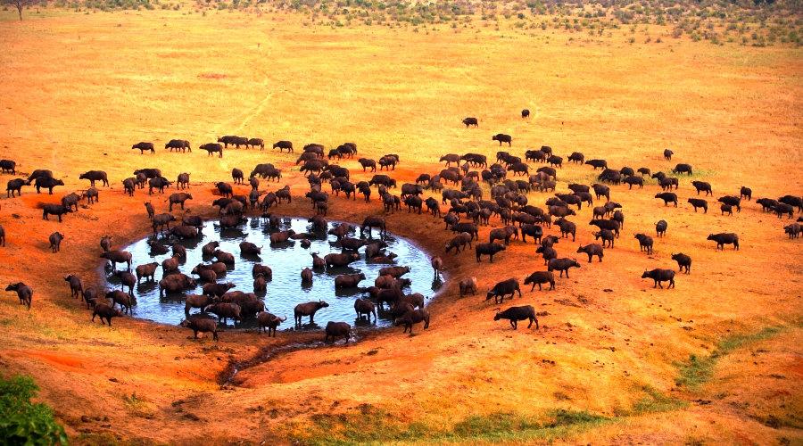 parque del serengeti la naturaleza africana panavisión tours